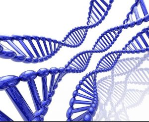 Read more about the article All You Wanted to Know about DNA Tests but Had No One to Ask